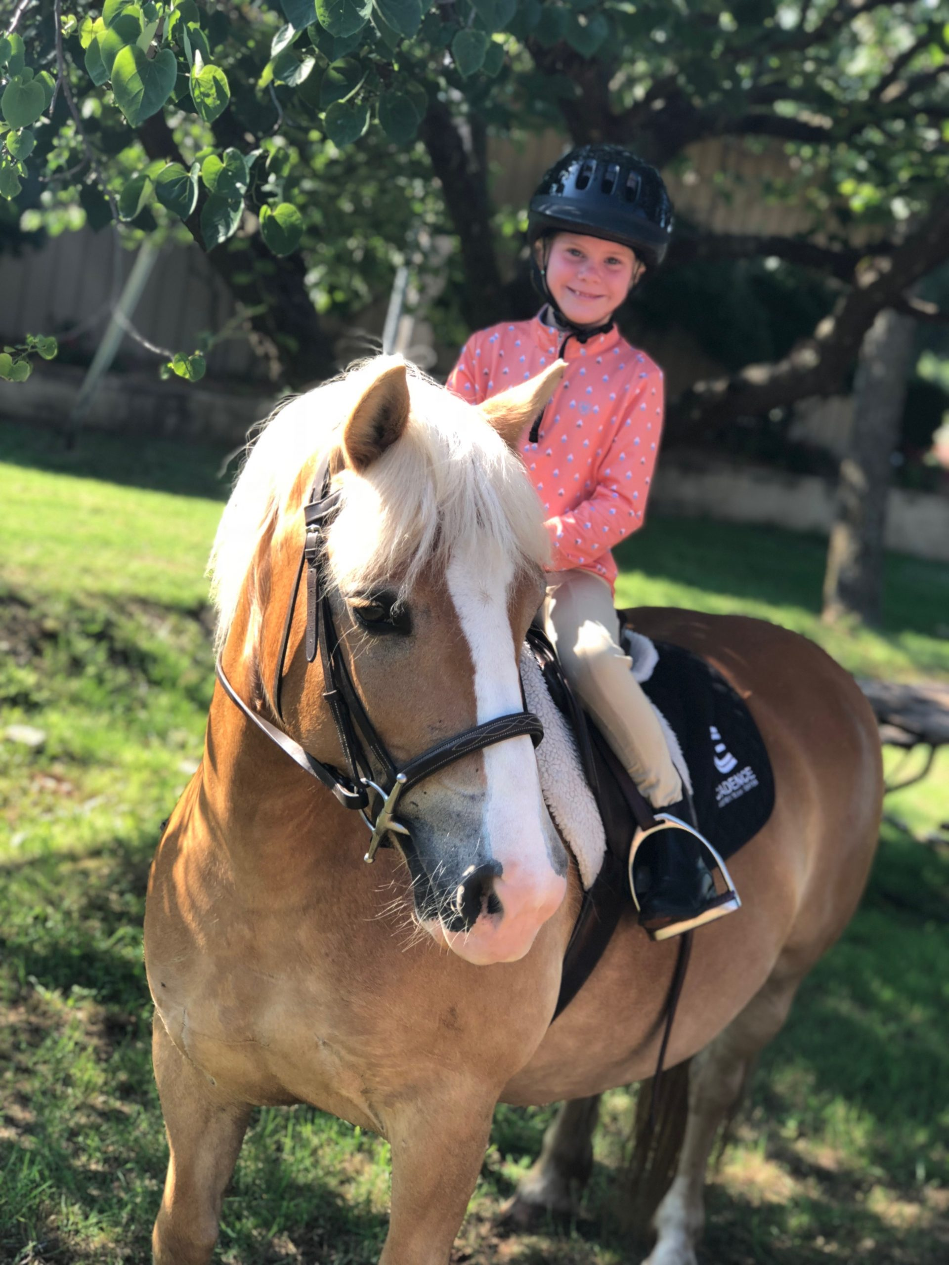 Cadence Equestrian horse and rider 2